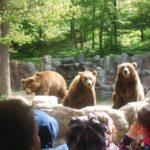004 Medvedi